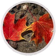 Maple Leaves In Water Round Beach Towel