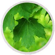 Maple Leaves Round Beach Towel