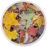 Maple Leaves Round Beach Towel