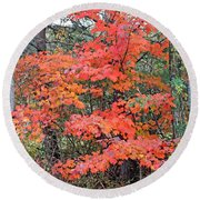 Maple Rush In The Fall Round Beach Towel