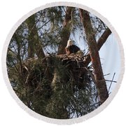 Marco Eagle - Protecting Its Nest Round Beach Towel