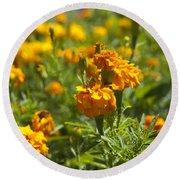 Marigold Flowers Round Beach Towel