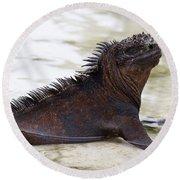 Marine Iguana Galapagos Round Beach Towel