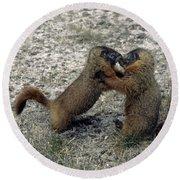4m09150-02-marmot Fight Round Beach Towel