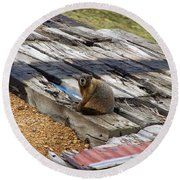 Marmot Resting On A Railroad Tie Round Beach Towel