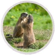 Marmots Round Beach Towel