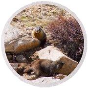 Marmots On Mount Evans Round Beach Towel