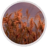 Marsh Reeds Aglow  -  150218a-162 Round Beach Towel