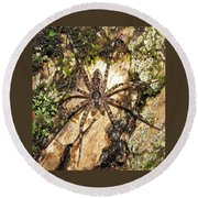 Brown Fishing Spider Round Beach Towel