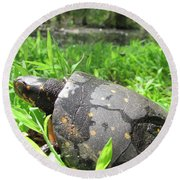Maryland Spotted Turtle Round Beach Towel