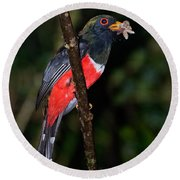 Masked Trogon With Moth Round Beach Towel