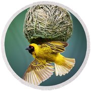 Masked Weaver At Nest Round Beach Towel by Johan Swanepoel