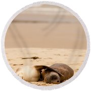 Mating Hookers Sealions Taking A Nap On Beach Round Beach Towel