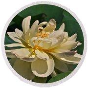 Mature Lotus Flower And Cute Hovering Honeybee Round Beach Towel