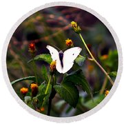 Maui Butterfly Round Beach Towel