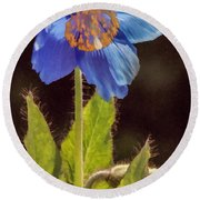 Meconopsis Himalayan Blue Poppy Round Beach Towel