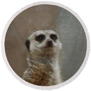 Meerkat 5 Round Beach Towel