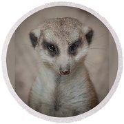 Meerkat Stare-down Round Beach Towel