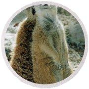 Meerkats Suricata Suricatta Round Beach Towel
