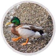 Meet Mr. Quack - A Mallard Duck Round Beach Towel