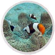 Meet The Nemo Family Round Beach Towel