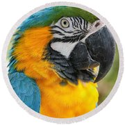 Mele E Manono Ia Ea Macao Tropical Birds Of Hawaii Round Beach Towel