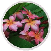 Melia Hae Hawaii Pink Tropical Plumeria Keanae Round Beach Towel