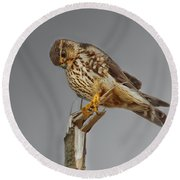 Merlin Falcon Searching For Prey Round Beach Towel