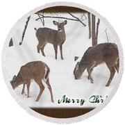 Merry Christmas Card - Whitetail Deer In Snow Round Beach Towel