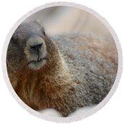 Merry Marmot Round Beach Towel