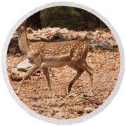 Mesopotamian Fallow Deer  Round Beach Towel