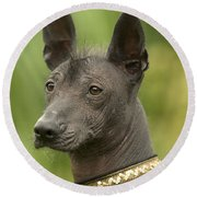 Mexican Hairless Dog Round Beach Towel