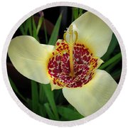 Mexican Shell Flower Round Beach Towel