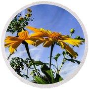 Mexican Sunflower Round Beach Towel