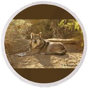 Mexican Wolf Close Up Round Beach Towel