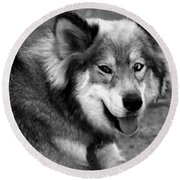 Miley The Husky With Blue And Brown Eyes - Black And White Round Beach Towel by Doc Braham
