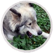 Miley The Husky With Blue And Brown Eyes - Impressionist Artistic Work Round Beach Towel