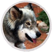 Miley The Husky With Blue And Brown Eyes Round Beach Towel by Doc Braham