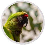 Military Macaw Round Beach Towel