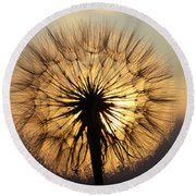 Beauty Of The Dandelion 2 Round Beach Towel