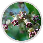 Milkweed Bloom Round Beach Towel
