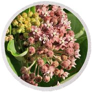 Milkweed Flowers In Bud Round Beach Towel