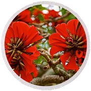 Milkwood Tree Blossoms In Donkin Reserve In Port Elizabeth-south Africa Round Beach Towel