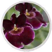 Miltoniopsis Rouge 'california Plum'  Macro  2692 Round Beach Towel