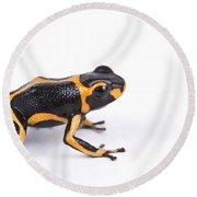 Mimic Poison Dart Frog Round Beach Towel