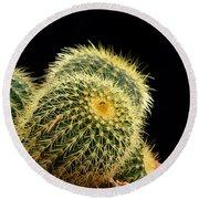 Mini Cactus In A Pot Round Beach Towel