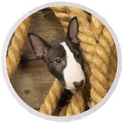 Miniature Bull Terrier Puppy Round Beach Towel