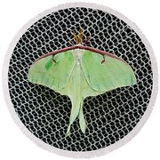 Mint Green Luna Moth Round Beach Towel