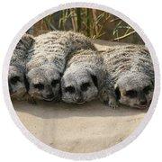 Mischievous Meerkats Round Beach Towel