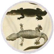 Mississippi Alligator Round Beach Towel